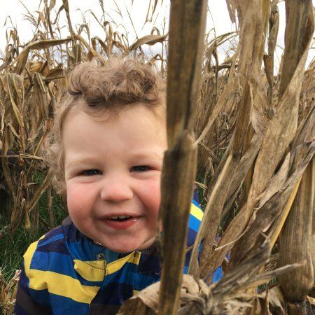 In het maisveld